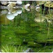 Создание ландшафтных комплексов водоемы каскады водопады пруды фото