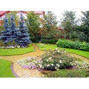 Ландшафтный дизайн сада Крым фото