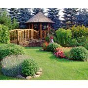 Ландшафтный дизайн сада Дизайн сада Ялта Крым фото