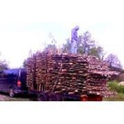 Плетень тын из лозы Киев фото