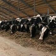 Продукция животноводства,животноводство фото