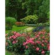 Устройство розария и сиренгария фото