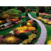 Подбор растений для сада Киев Украина фото