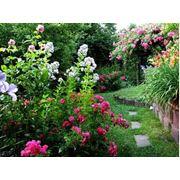 Озеленение сада Уход за садом  Днепропетровск  Украина фото