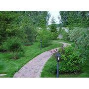 Озеленение сада Киев фото