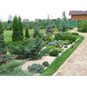 Озеленение сада ландшафтные проекты Киев Украина фото