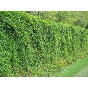 Озеленение сада, озеленение сада цена, проекты озеленение сада, услуги озеленение сада. фото