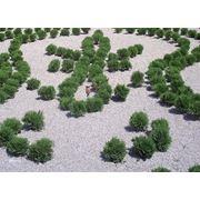 Мульчирование почвы на зиму посадка и уход за садом Днепропетровск фото