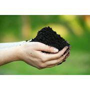 Почва растительная фото