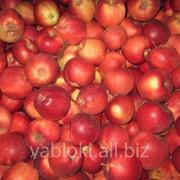Продам яблоки летних сортов фото
