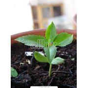 Подкормка растений минеральными и органическими удобрениями купить Украина. фото