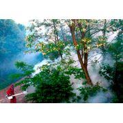 Защита растений от насекомых-вредителей и болезней фото