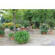 Профилактическая обработка растений в Донецке фото