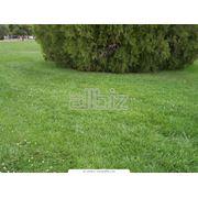 Уход за газонными покрытиями аэрация газоновгазоныценафотокупитьзаказатьКиев фото