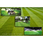 Восстановление газона фото