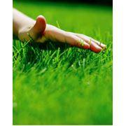 Торфосмесь для выращивания комнатных и балконых растений подкормка газонов и ягодников. Подкормка растений минеральными и органическими удобрениями фото