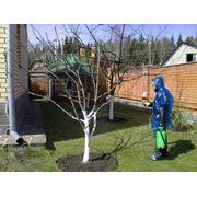 Обработка деревьев и кустов фото
