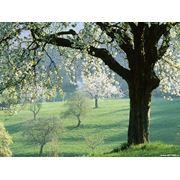 Средства для защиты садовых деревьев купить в Украине. фото
