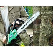 Обрезка садов. Срезание сухих деревьев. Спиливание дерева частями. Удаление деревьев с автовышки. фото