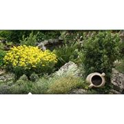 Посадка и уход за садом Ландшафтные услуги фото