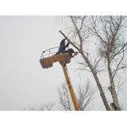 Обрезка деревьев веток любой сложности фото