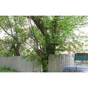 Обрезка деревьев Донецкая область фото
