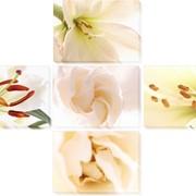 Модульная картина Белые цветы 2, Неизвестен фото