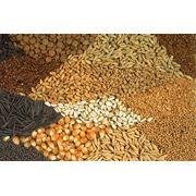Семена оптом: Пшеница Подсолнечник Рапс Лен для полеводства фото
