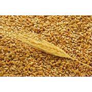 Сельхозпроизводство зерновых
