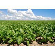 Обеспечение средствами защиты растений