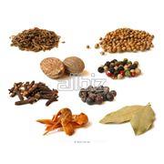 Закупка семян для растениеводства фото