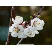 Комплексное удобрение для прибавки урожайности фруктовых деревьев купить Украина. фото