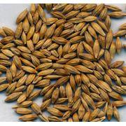 оказываем услуги по выращиванию зерновых