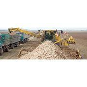 уборка и погрузка сахарной свеклы и буряка импортными комбайнами Холмер и Франц Кляйне по территории Украины. фото
