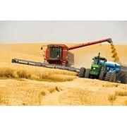 Уборка урожая зерновыми комбайнами фото