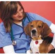Ветеринарные лаборатории фото