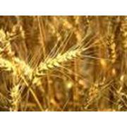 Экспорт зерновых культур фото