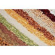 Переработка сельхозпродукции Украина фото