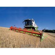 Уборка зерновых технических культур фото