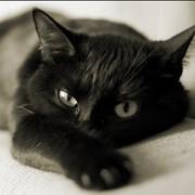 Лечение животных в стационаре фото