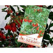 Семена годжи фото