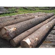древесина фото