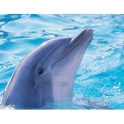 Акваленд Дельфинарий в Анталии фото