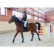 Навыки верховой езды. Катание на лошадях Иппотерапия. Общение с животными. Занятие конным спортом. Конный рейд. Прогулка конная. Конные соревнования. Конный спорт. Игры верхом. фото