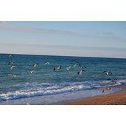 отдых на черном море Севастополь фото
