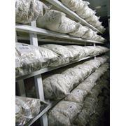 Мицелий (посевной материал для выращивания грибов) фото
