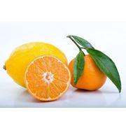 Продажа цитрусовых оптом фрукты цитрусовые турецкие апельсины грейпфруты красные и желтые опт. фото