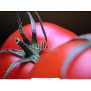 Красные помидоры купить цена фото
