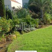 Озеленение, благоустройство сада, проектирование Донецк фото