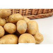 Картофель свежий урожая 2012 сорт Эмма отличного качества цена фото